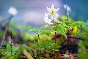 White beauty of nature photo