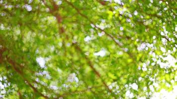 Beautiful green vibrant natural floral video bokeh abstract background