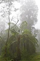 helecho en la niebla foto