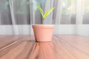macetas plantadas en la habitación foto
