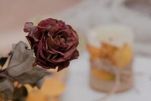 Close-up dry burgundy rose on light background photo