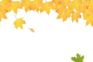 Yellow-orange maple leaves on a background of autumn nature photo