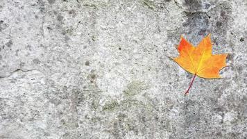 Falling autumn maple leaf on a concrete surface video
