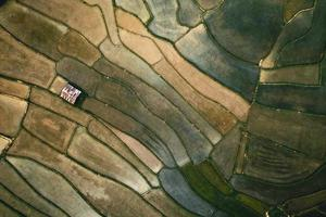 Landscape paddy rice field in Asia, aerial view of rice fields photo