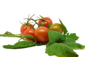 Tomato over leaves on white background photo