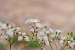 la hierba y la flor, flor blanca en el exterior. foto