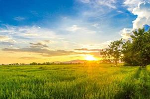 Landscape of cornfield and green field with sunset on the farm photo