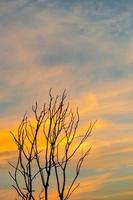 silueta de árbol muerto y rama seca con hermoso cielo y cielo azul foto