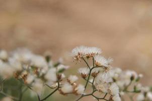 flor de hierba y flor blanca en el jardín, macro de flor de hierba. foto