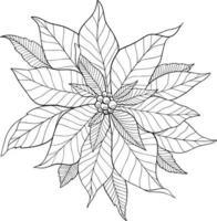 Poinsettia Flower Outline Poinsettia Line Art Christmas Holly vector