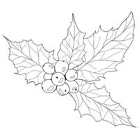 Holly Verry Outline Chridtmas Holly Line Art Line Drawing Christmas vector
