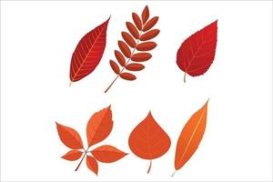 set of autumn leaves vector eps 10