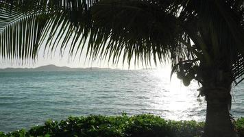 blue sea with coconut tree  video