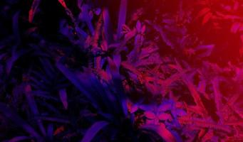 Tropical black light glowing leaves photo