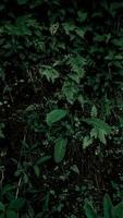 Tropical dark green leaf background photo