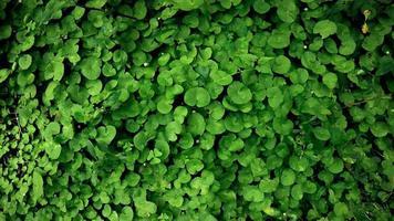Green vines background photo