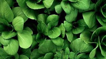 Top view of green fresh vegetable background photo