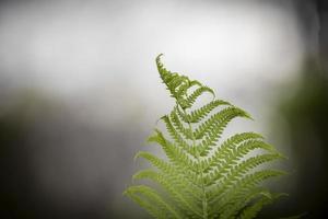 Close up shot of Fern leaves photo