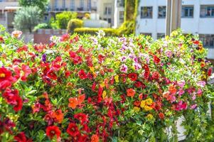 Flower Festival in Girona Temps de Flors, Spain. 2018 photo
