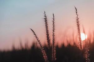 flor de la hierba en el jardín con luz de la mañana, concepto de crecimiento de la vida. foto