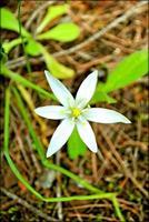 flor flor de cerca la naturaleza de fondo foto