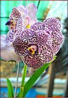 flor flor de cerca la naturaleza impresiones de fondo foto