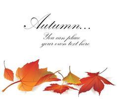 Fall leaf nature banner Autumn leaves background Season floral set vector