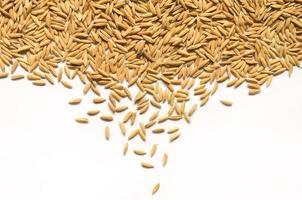 Fondo y papel tapiz por pila de arroz con cáscara y semillas de arroz. foto