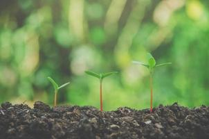 Greenery of young plant and seedling are growing in the soil. photo