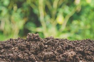 el verdor de plantas jóvenes y plántulas están creciendo en el suelo. foto