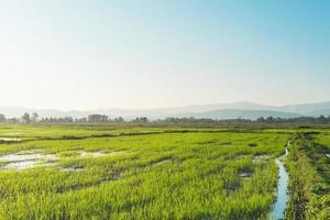 Landscape of greenfield and rice seedlings, Farms with rice seedlings photo