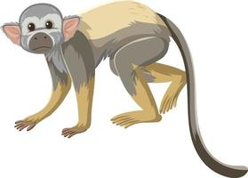 Squirrel monkey cartoon character isolated on white background vector