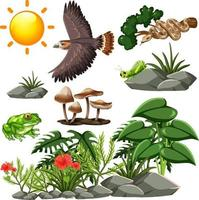 Wildlife seamless pattern with many different wild animals and plants vector