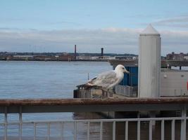 gaviota en el puerto foto