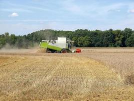 Harvester in a field of barley for beer production photo