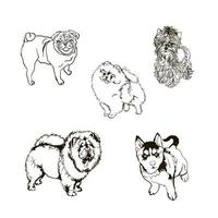 set of outline illustrations with dogs of different breeds vector