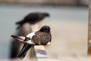 palomas sentadas en una barandilla foto