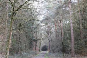 carretera en el fondo del bosque alemán stock photography impresiones de alta calidad foto