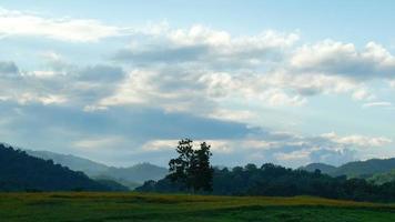 arbre solitaire avec des images de laps de temps de nuage video