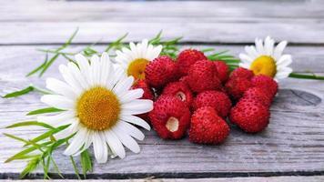 primer plano de fresa de jardín foto
