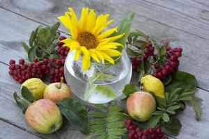 jarrón con flores de girasol, bayas de serbal y manzanas foto