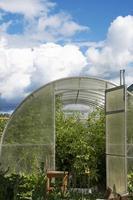 invernadero con verduras en otoño. foto
