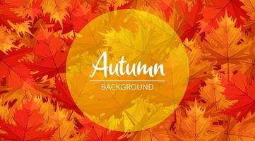 Autumn background design with maple leaves on the ground illustration vector