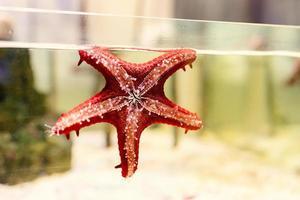 acuarios con estrellas de mar en oceanario foto