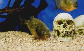 Aquariums with fish in oceanarium photo