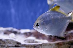 Underwater image of fish in the sea photo