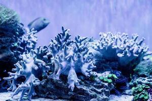 Imagen submarina de plantas marinas y algas en el mar. foto