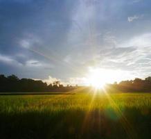 Green rice field rainy season and sunset photo