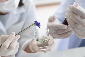 científicos que realizan un experimento en una planta. foto