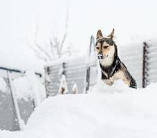 Gracioso lindo perro de raza mixta jugando en la nieve en el patio trasero foto